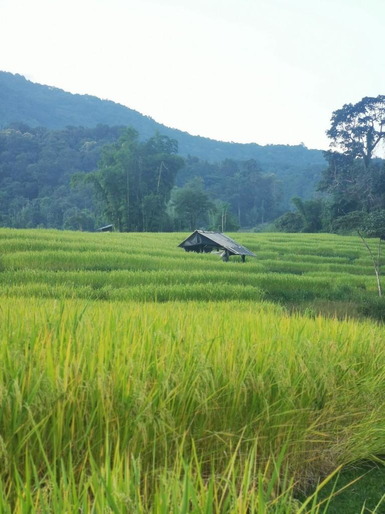 Mae Klang Luang Homestay