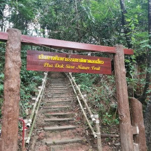 Hike in Doi Inthanon